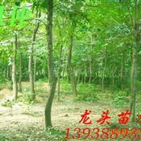 杜仲,绿化苗木,乔木,花灌木,灌木