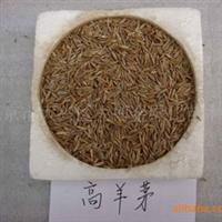供应;高羊茅、多年生黑麦草、草地早熟禾(图)