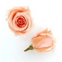 OL首选家居装饰品 产家直销 玫瑰、绣球、蓬莱松、高山羊齿