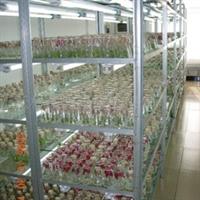 供应蓝莓种苗