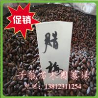 腊梅苗木 腊梅种子 当年新种子48元一斤