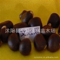 专业种子,文冠果种子,文冠果种子供应,文冠果种子价格咨询