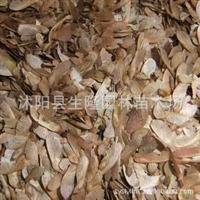 现货供应 进口美国红枫种子 r