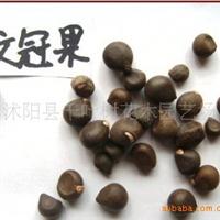 出售当年新采林木树种 文冠果种子 文冠木 土木瓜 温旦革子