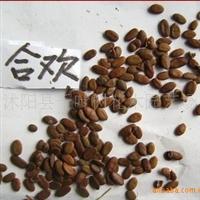 出售新采林木树种 合欢种子别名:马缨花 绒花树 合昏 夜合 鸟绒
