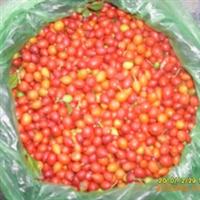 九里香种子