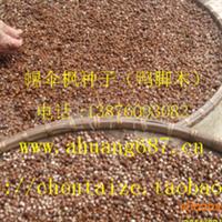 幌伞枫种子 新摘净干种子 1斤120元