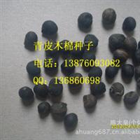 青皮木棉种子 80元/斤