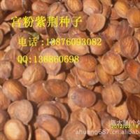 宫粉紫荆)种子 园林行道树种 全新种子