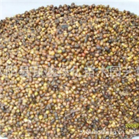 批发供应优质 红豆杉种子 品种齐全 量大从优