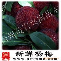 浙江黑碳/荸荠/杨梅新鲜/特级水果杨梅/真空包装【台州兴梅】