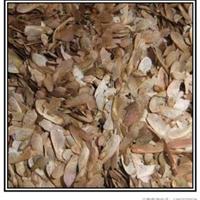 供应美国红枫种子