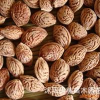 供应毛桃核种子 桃树种子 当年新�� 优质桃核