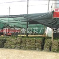 供应 黑麦草 绿化草坪   草皮(图)