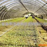 寻求优良果树和绿化苗木试点栽培、推广合作