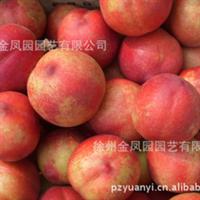 预售2012年优质油桃,个大味甜,色泽鲜