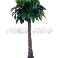 供应花卉植物租赁 发财树花卉绿植租摆 盆景花木出租