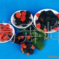 供应提前预定2012热销树莓�r果