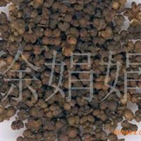 常年大量供应白术、杜英、连翘、玉簪、马棘等花卉种苗
