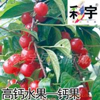 供应钙果树钙果苗,果树,果苗,花卉,花卉苗