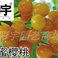 供应黄蜜樱桃树樱桃苗,果树,果苗,花卉,花卉苗