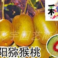 供应红阳猕猴桃树猕猴桃苗,果树,果苗,花卉苗