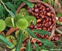 供应优质美观漂亮 苗木 价格优惠