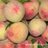 供应桃树新品种 嫁接 桃树 早熟桃树 水蜜桃苗 桃树基地