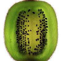 生产厂家长期专供20吨猕猴桃籽(奇异果籽)