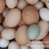长期供应原生态系列蛋--虫草鸡蛋