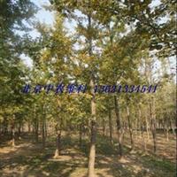 北京购买果树买果树苗买绿化树请打13621334541