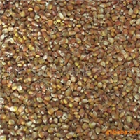 2010年秋大量低价供应(代理收购)玉米