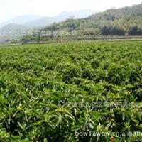 杜鹃-宁波--绿化-深夜草莓视频app下载13989369668