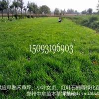 草坪建植-草坪卷供应-中牟草坪基地