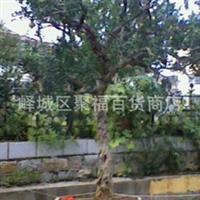 长期出售 造型美观 价格实在的 石榴树盆景