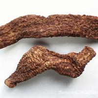 沙漠人参---肉苁蓉【产于甘肃、内蒙古、新疆、青海等地。】