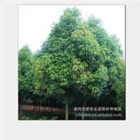 【质量保证】l厂家直销 供应各种规格的   楠木