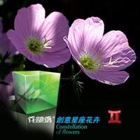 [花部落] 月见草花种 创意办公室盆栽 双子座守护花 十二星座花卉