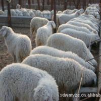 山西肉羊河北肉羊江苏肉羊安徽肉羊河南肉羊试养技术