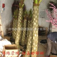 浓郁亚热带气息 专业制作酒店展览景不雅观安插 仿真高质白桫椤树叶