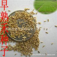 供应进口草种-早熟禾,早熟禾草籽,量大从优
