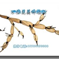 供应莲藕种——安徽飘花(原种)