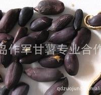 直销粒大饱满 营养丰富有机紫花生(图)