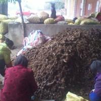 大量供应优质槟榔芋种(免运费)