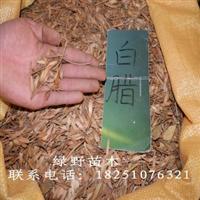 新采林木树种 苗木种子 白蜡种子 青榔木种子 白荆树树种子