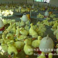 市场优质畅销大量优质鹅苗 成活率高 量大价优