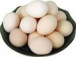 云鹤特种养殖场大量供应贵妃鸡蛋