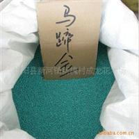 特价出售新采摘四季常青植物马蹄金种子 铜钱草种子