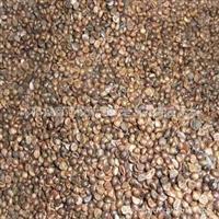 供应皂角种子  紫藤种子 五叶爬山虎种子