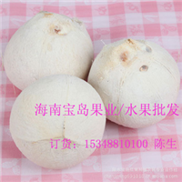 白壳椰子/嫩椰子/毛椰王/青皮椰子/新鲜水果园采摘加工批发供应